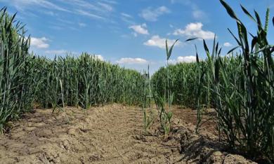 Twee derde Groningers maakt zich ongerust om milieu en klimaatverandering